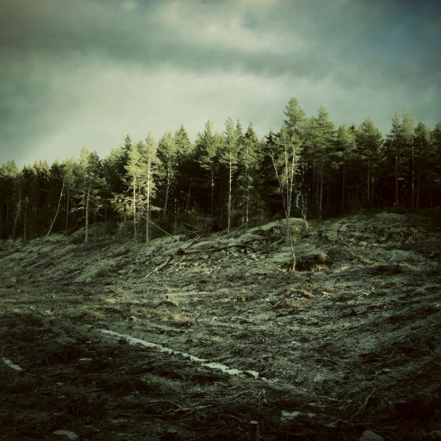 """Deforestation in Sweden"" stock image"
