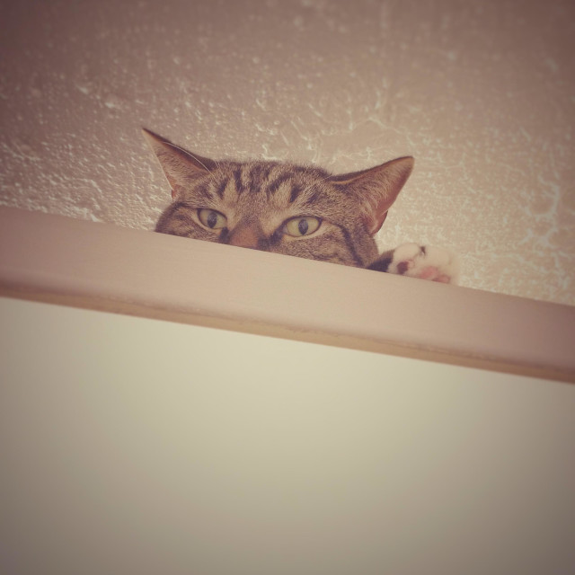 """""""Cat on a cupboard."""" stock image"""