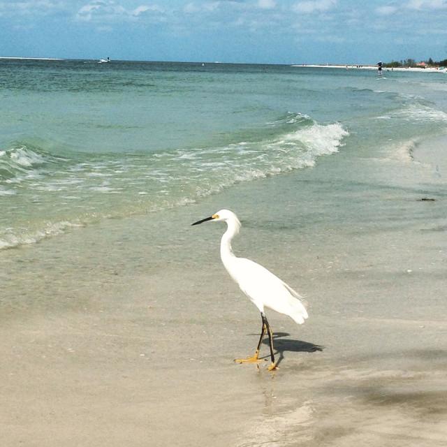 """Fort de Soto, Florida, beach"" stock image"