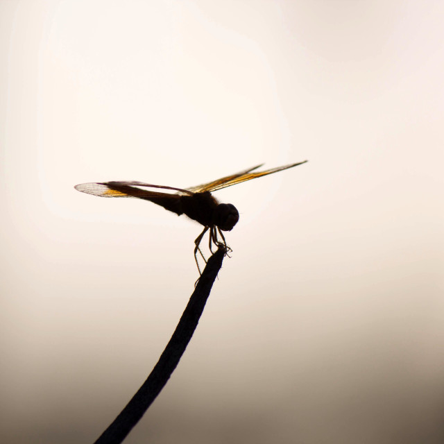 """Dragonfly in nature"" stock image"
