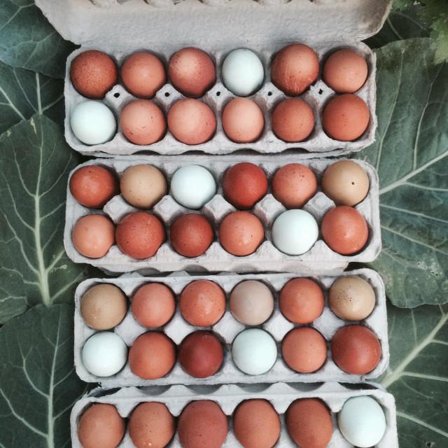 """Fresh free range eggs!"" stock image"