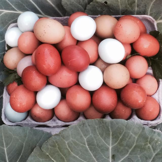 """""""Free range eggs."""" stock image"""