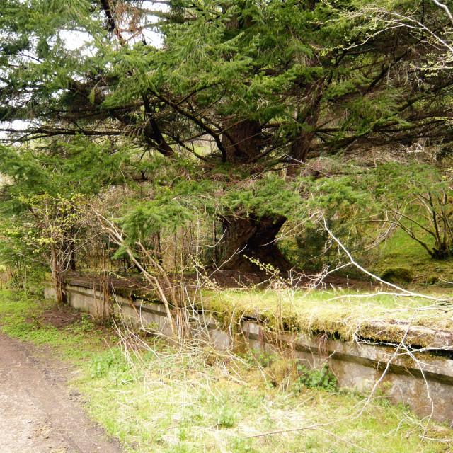 """Overgrown Railway Station, Scotland"" stock image"