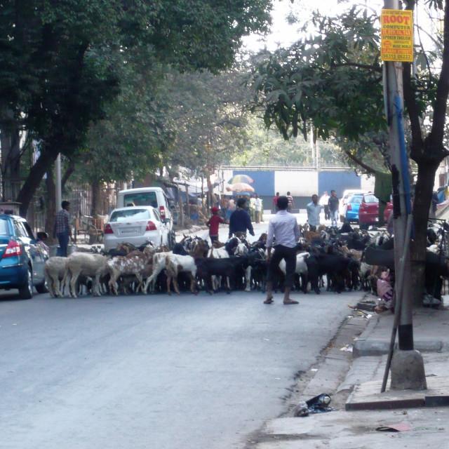 """""""Road block, Calcutta"""" stock image"""