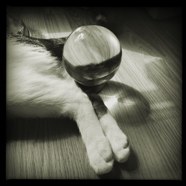 """""""Tabby and white cats hind legs with crystal ball"""" stock image"""