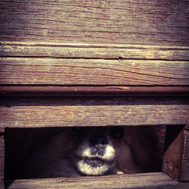 """""""Dog through a letterbox"""" stock image"""