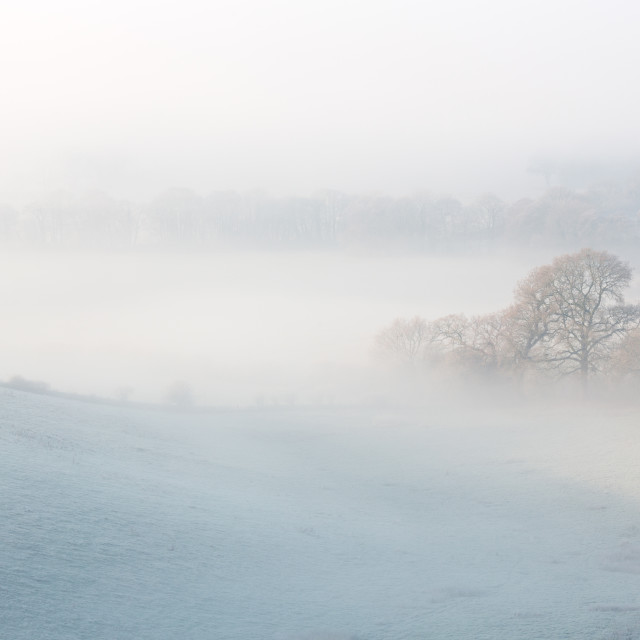 """""""A Frosty Morning"""" stock image"""