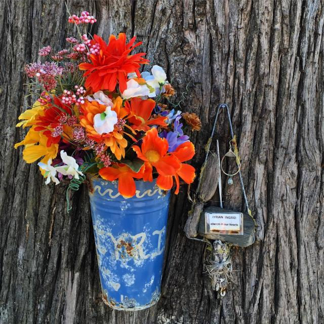 """""""Flowers on a tree in Capitola, California"""" stock image"""
