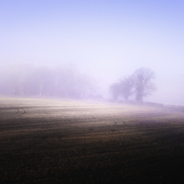 """A break in the fog"" stock image"