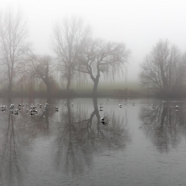 """Birds on the Lake"" stock image"