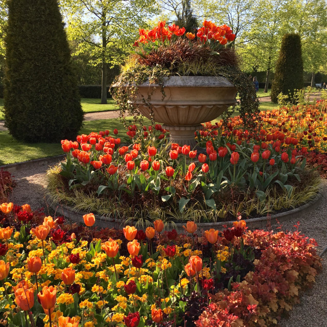 """An elaborate display of tulips in Regent's Park, London"" stock image"