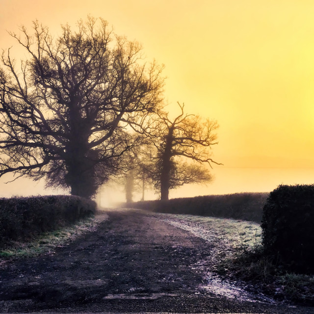"""Country lane on a cold morning in winter"" stock image"