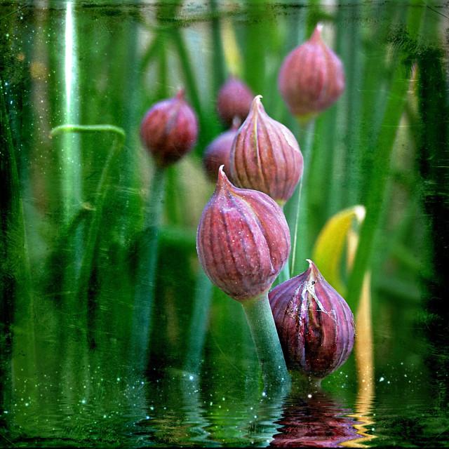 """""""...hidden beauties in my garden..."""" stock image"""