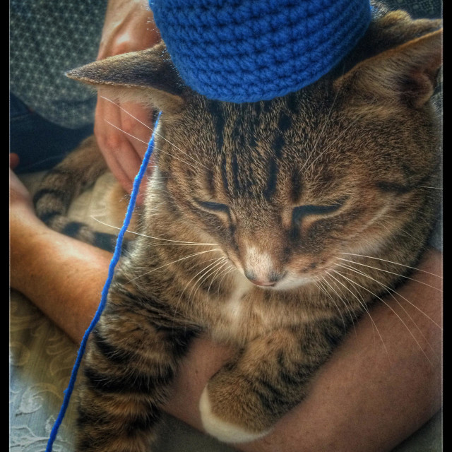 """""""Cat with crochet hat."""" stock image"""
