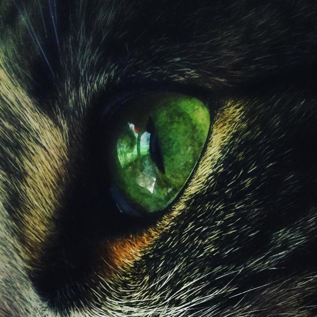 """Cats Eye"" stock image"