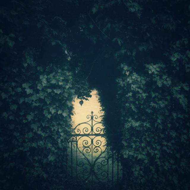"""Secret garden gate and hedge"" stock image"