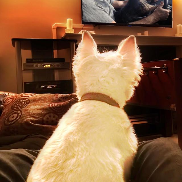 """""""Dog watching dog on TV"""" stock image"""
