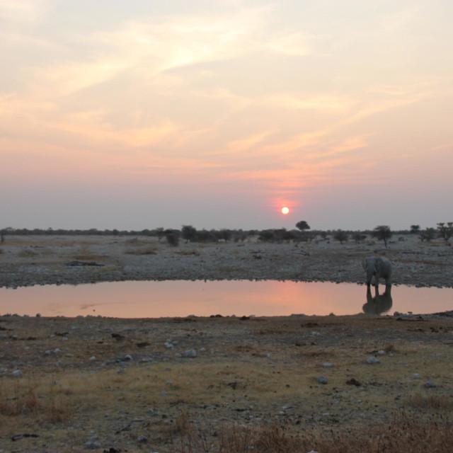 """""""Elefants im namibian Etosha nationalpark"""" stock image"""