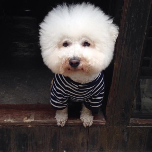 """Funny dog, Zhujiajiao, China"" stock image"