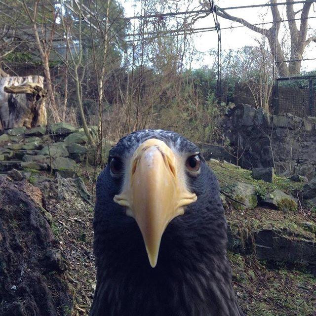 """""""A bird at Edinburgh Zoo becoming interested with the camera"""" stock image"""