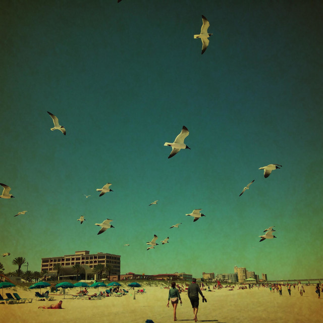 """Laughing gulls flying overhead at Jacksonville Beach, Florida, USA."" stock image"