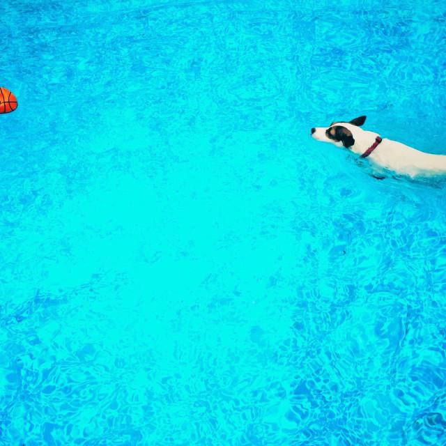 """Dog swimming towards orange ball in swimming pool. 16:9"" stock image"