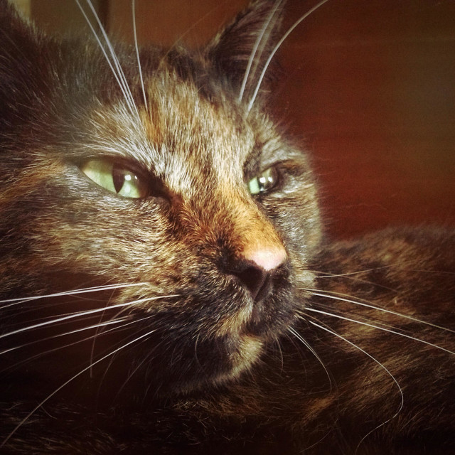"""""""Portrait of a cat in a nostalgic style of the film"""" stock image"""
