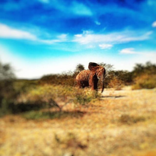 """""""Hluhluwe-iMfolozi park game reserve, KwaZulu Natal province, South Africa"""" stock image"""