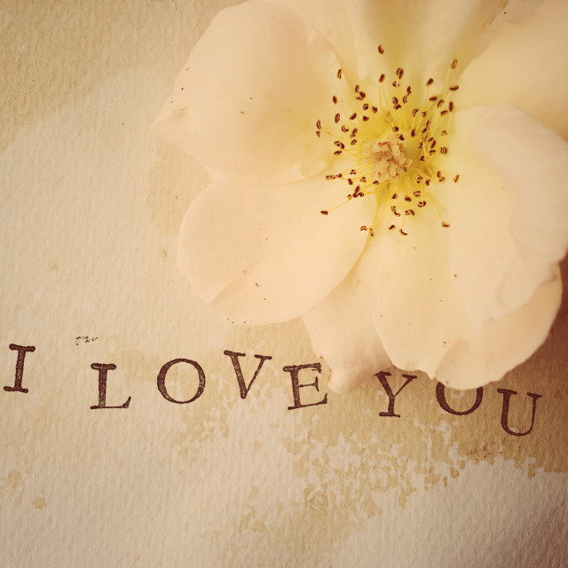"""""""Pale rose and I love you words"""" stock image"""