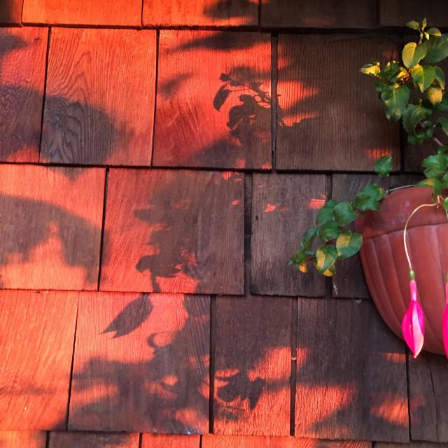 """Sunset shadows"" stock image"
