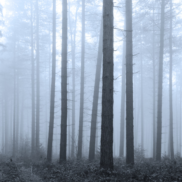 """Mysterious Forest"" stock image"