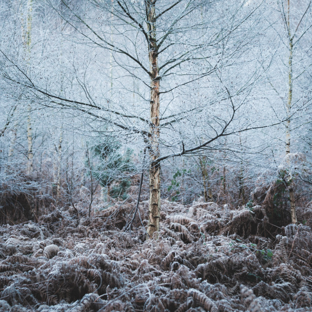 """""""Coldness"""" stock image"""