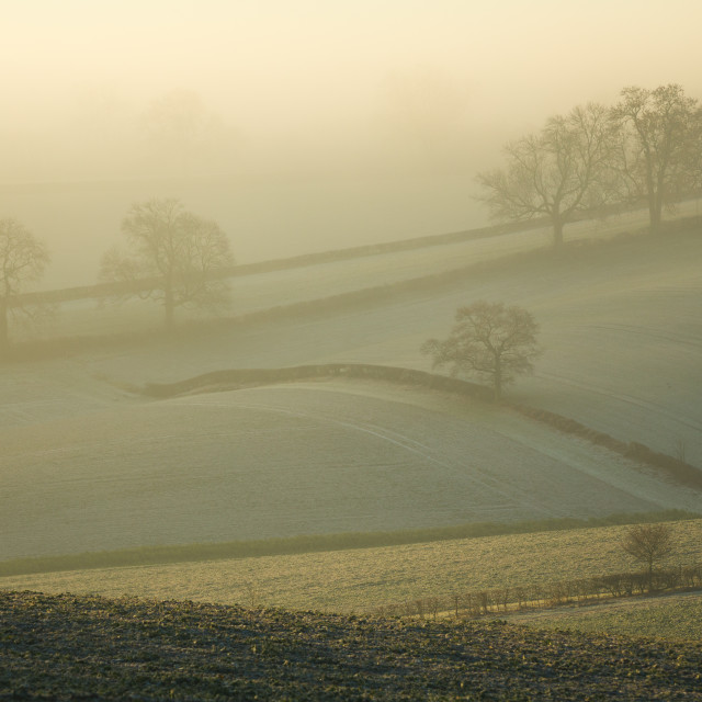 """Hedgerows in Mist"" stock image"