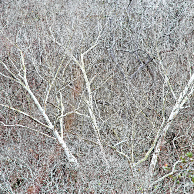 """winter branches"" stock image"