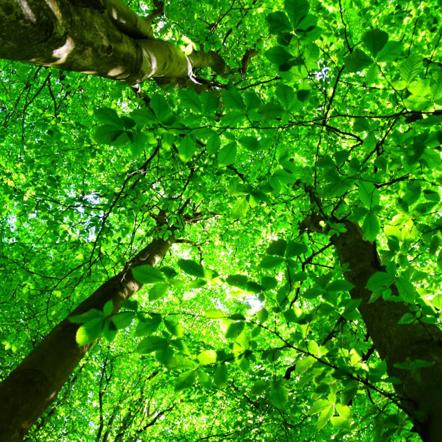 """""""Green leaves"""" stock image"""