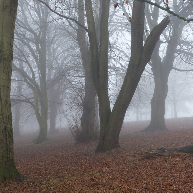 """A foggy morning"" stock image"