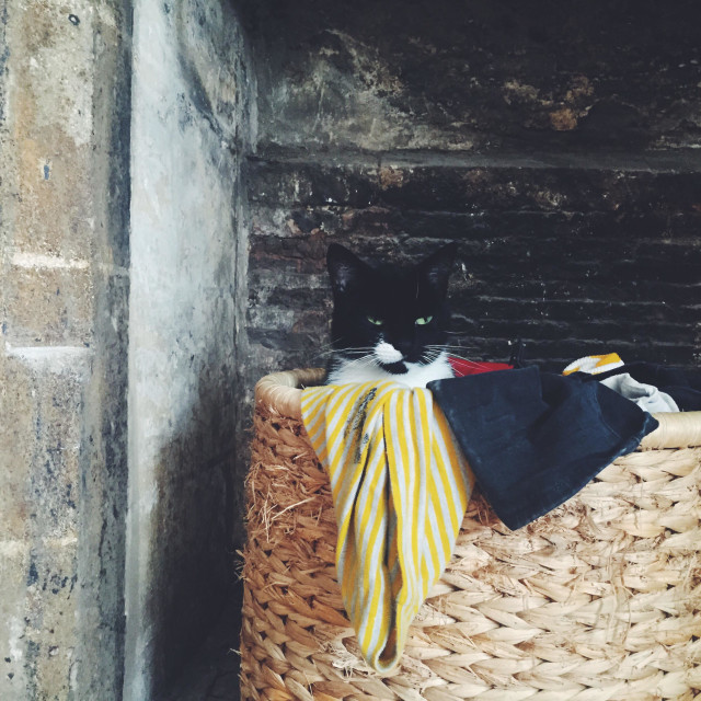 """""""Cat in a laundry basket."""" stock image"""