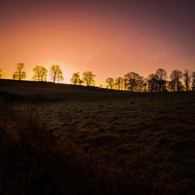 """Sunrise against trees"" stock image"