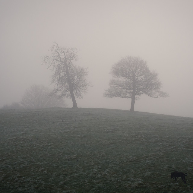 """Trees in fog"" stock image"