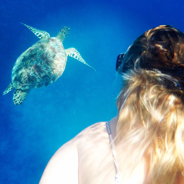 """Snorkelling with the turtles"" stock image"