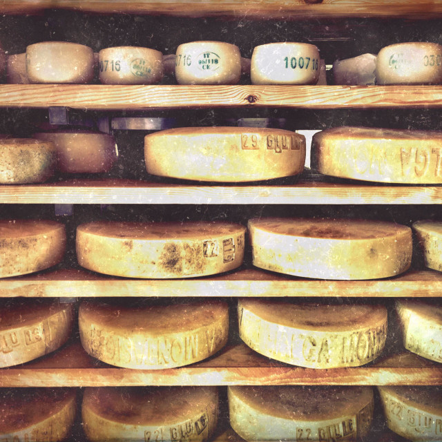 """Montasio cheese on shelves at Malga Montasio, Italy. The rind is stamped with the date of production."" stock image"