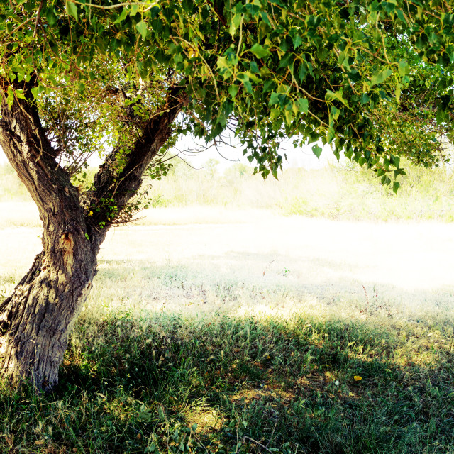 """""""Tree detail. Branchs and trunk"""" stock image"""