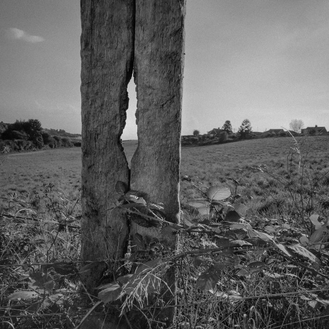 """""""Very weathered wooden fence post. British farmland in background."""" stock image"""
