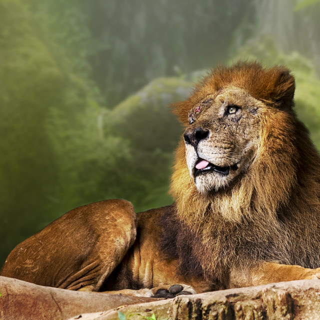 """""""Lord of the Jungle"""" stock image"""