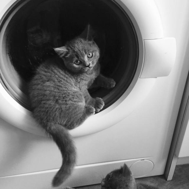 """Kittens at play"" stock image"