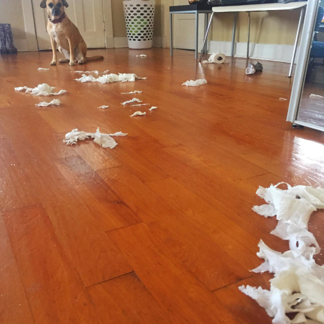 """""""Dog after making a mess"""" stock image"""