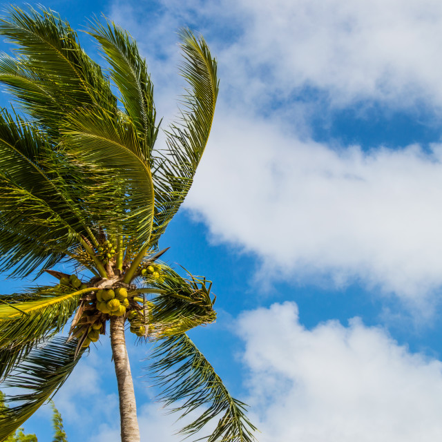 """""""Palm tree in the breeze"""" stock image"""