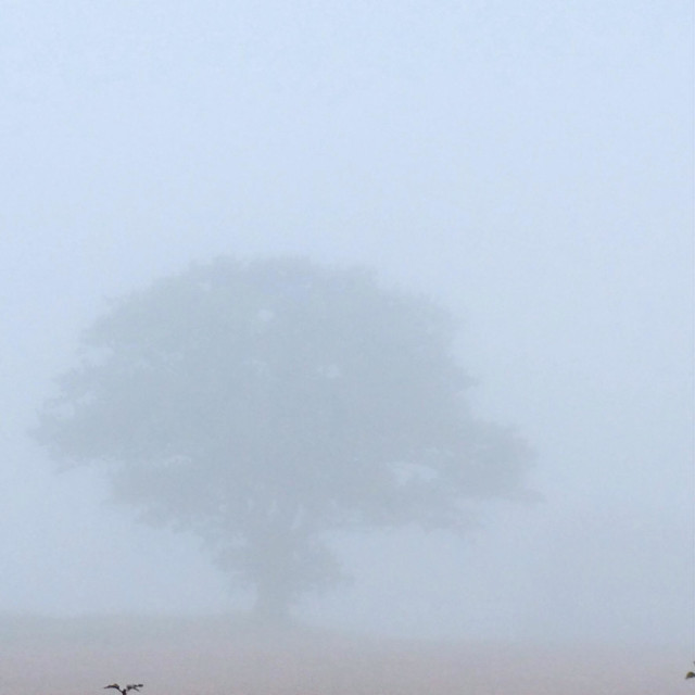 """A lone Tree in the light grey Mist, faint."" stock image"