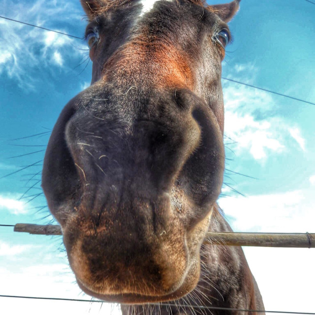 """Horse close up"" stock image"