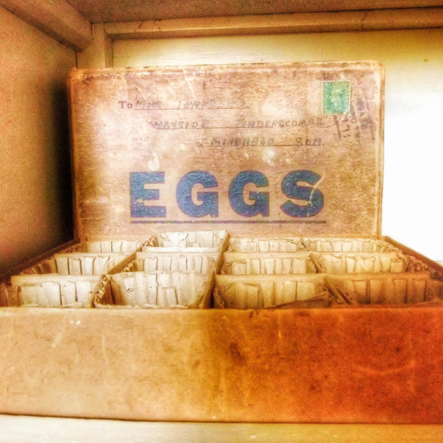 """Old egg box"" stock image"